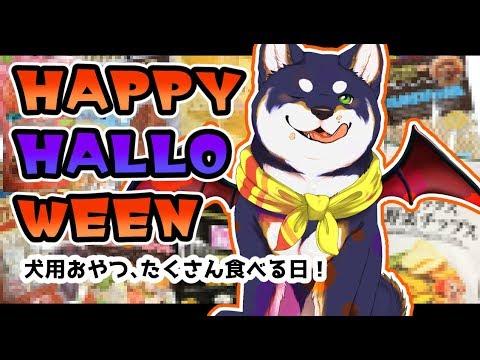 【6回目おさんぽ!】ハッピーハロウィン!犬用おやつを、たくさん食べる!