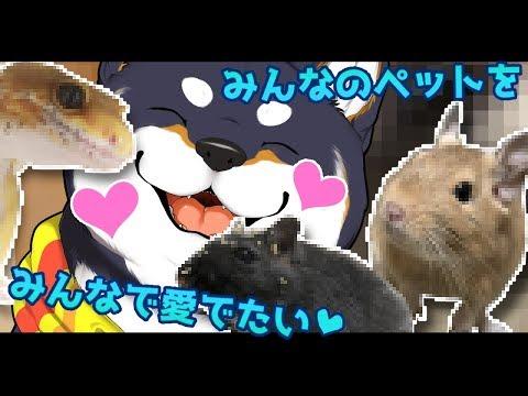 【9回目おさんぽ!】『うちのこがいちばんかわいい!』