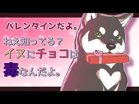 イヌに、チョコレートは毒。