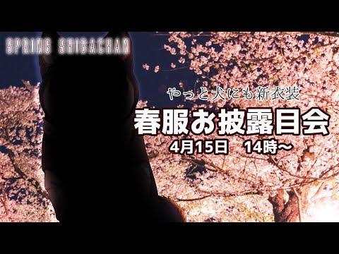【黒井しば/にじさんじ】新衣装おひろめ会!