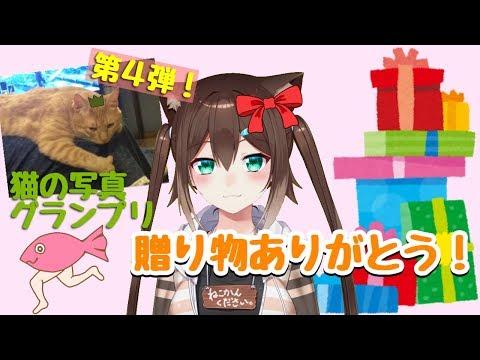 みんなからのプレゼント開封!!猫の写真グランプリ第4段