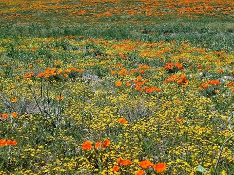 花畑チャイカとフリーチャット