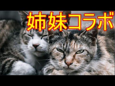 【歌】文野環お姉ちゃん♪【にじさんじ】
